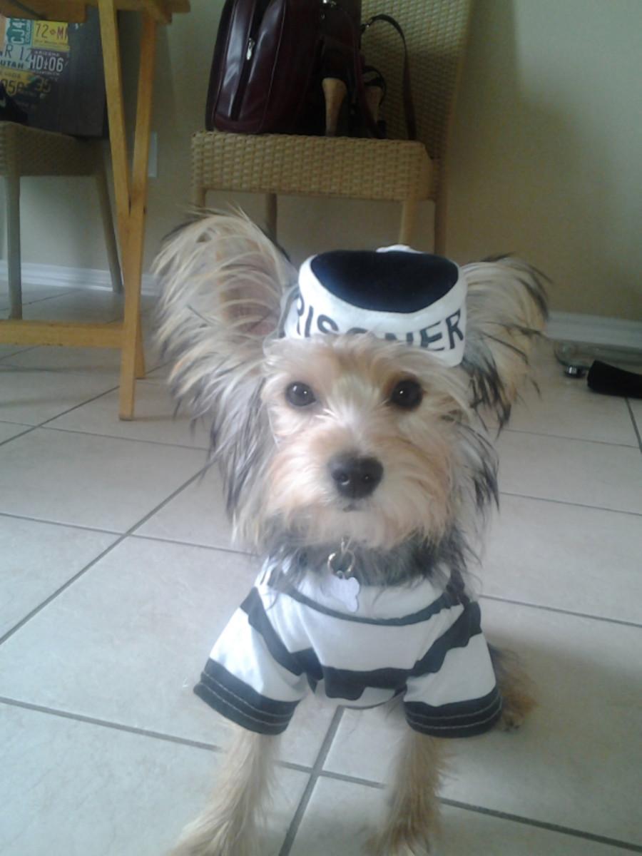 Photo taken by: Pets Adviser