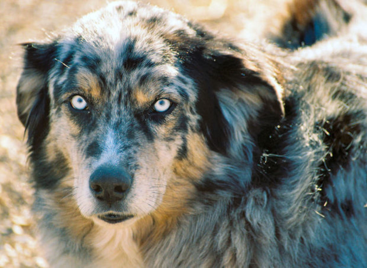 8-ways-to-keep-your-dog-out-of-trouble