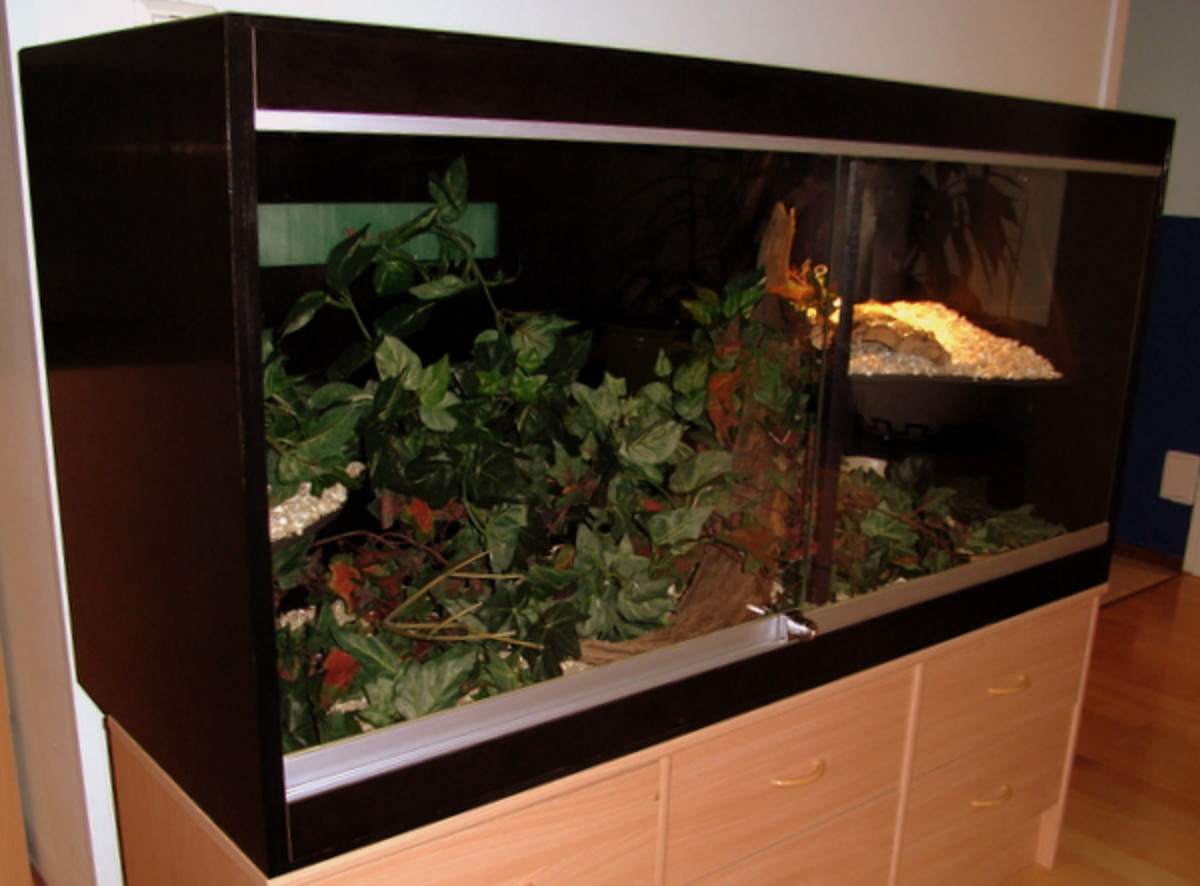 A glass fronted vivarium.