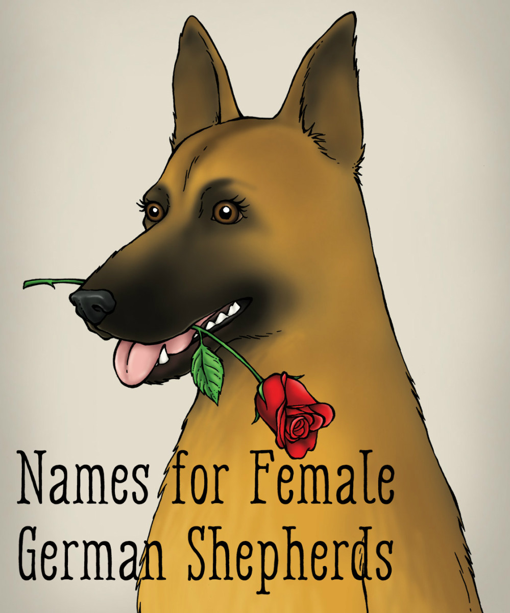 best-dog-names-for-german-shepherd-puppies