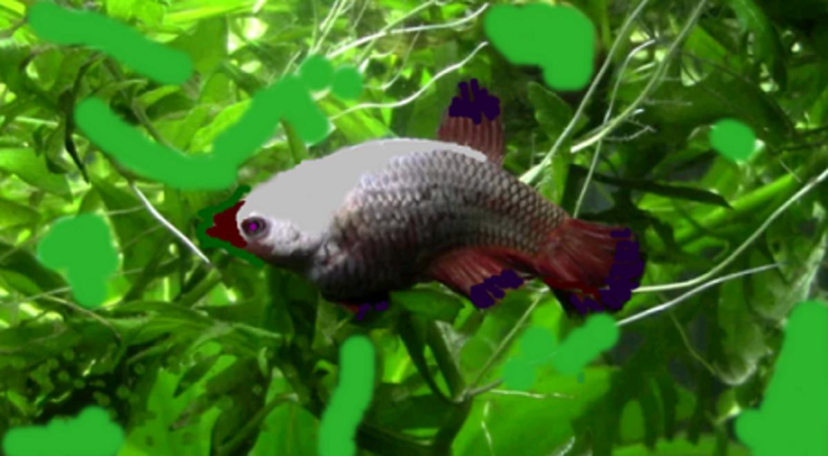 Fish with swim bladder disorder