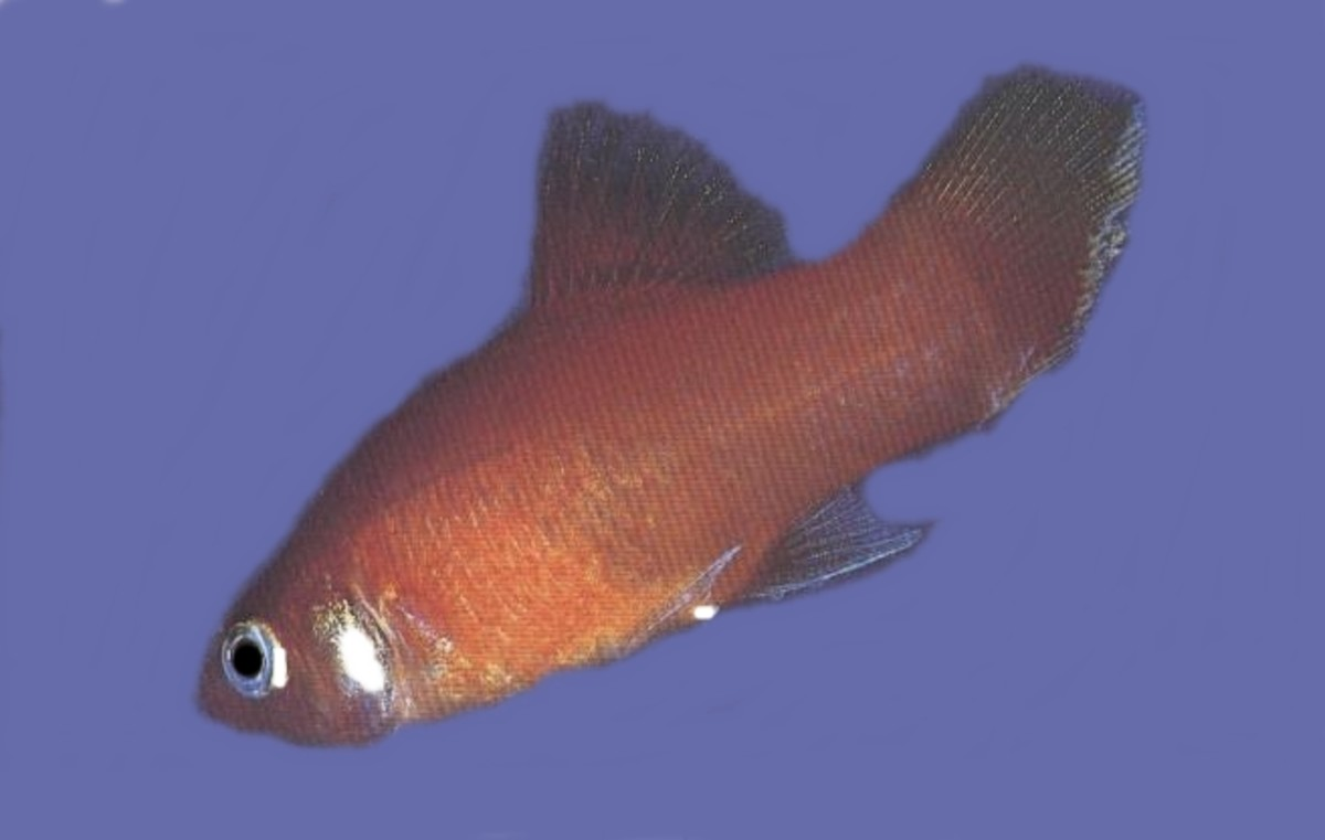 13 diseases of betta fish prevention and treatment for Tetracycline for fish