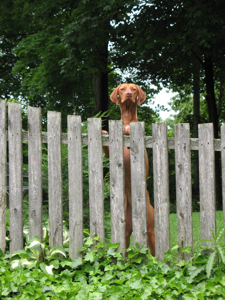 Privacy fence options for dog owners