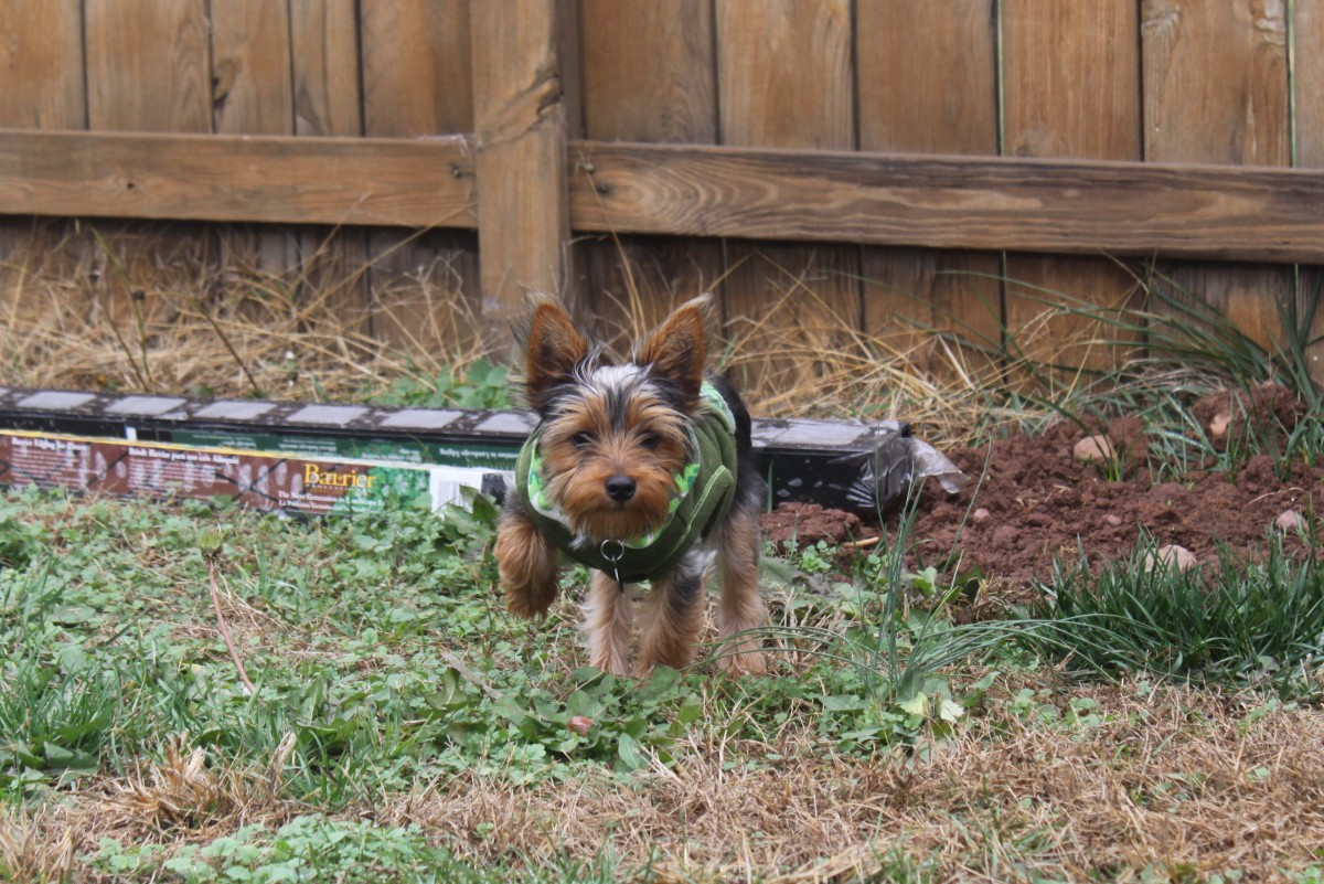 Tips to prevent dog fights along fences.