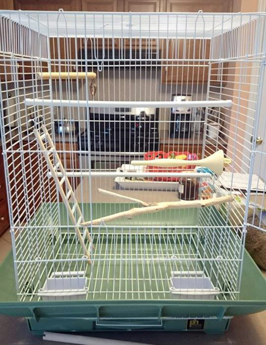 Here I have added all the perches to the bird cage and ensured that both birds that will be in this cage have plenty of space.