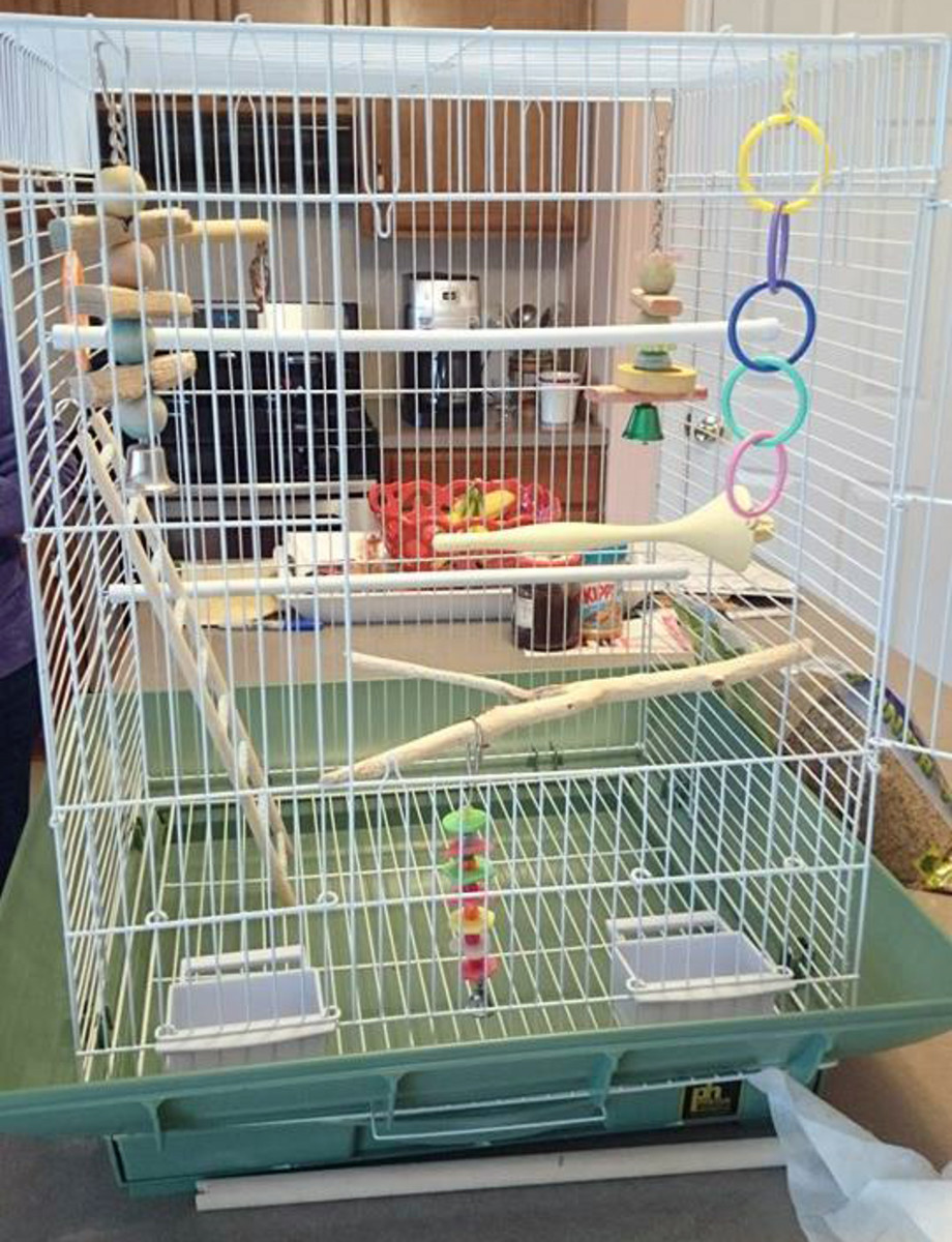 Don't overload the cage with toys so that the birds don't have space to move around or stretch anymore.