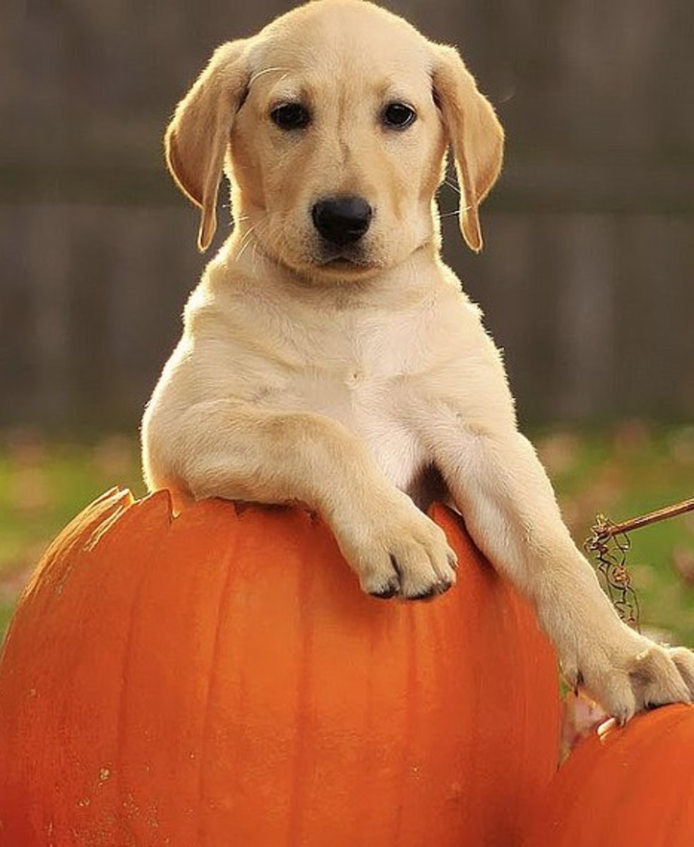 Pumpkin is one of the methods to help your dog pass swallowed objects.