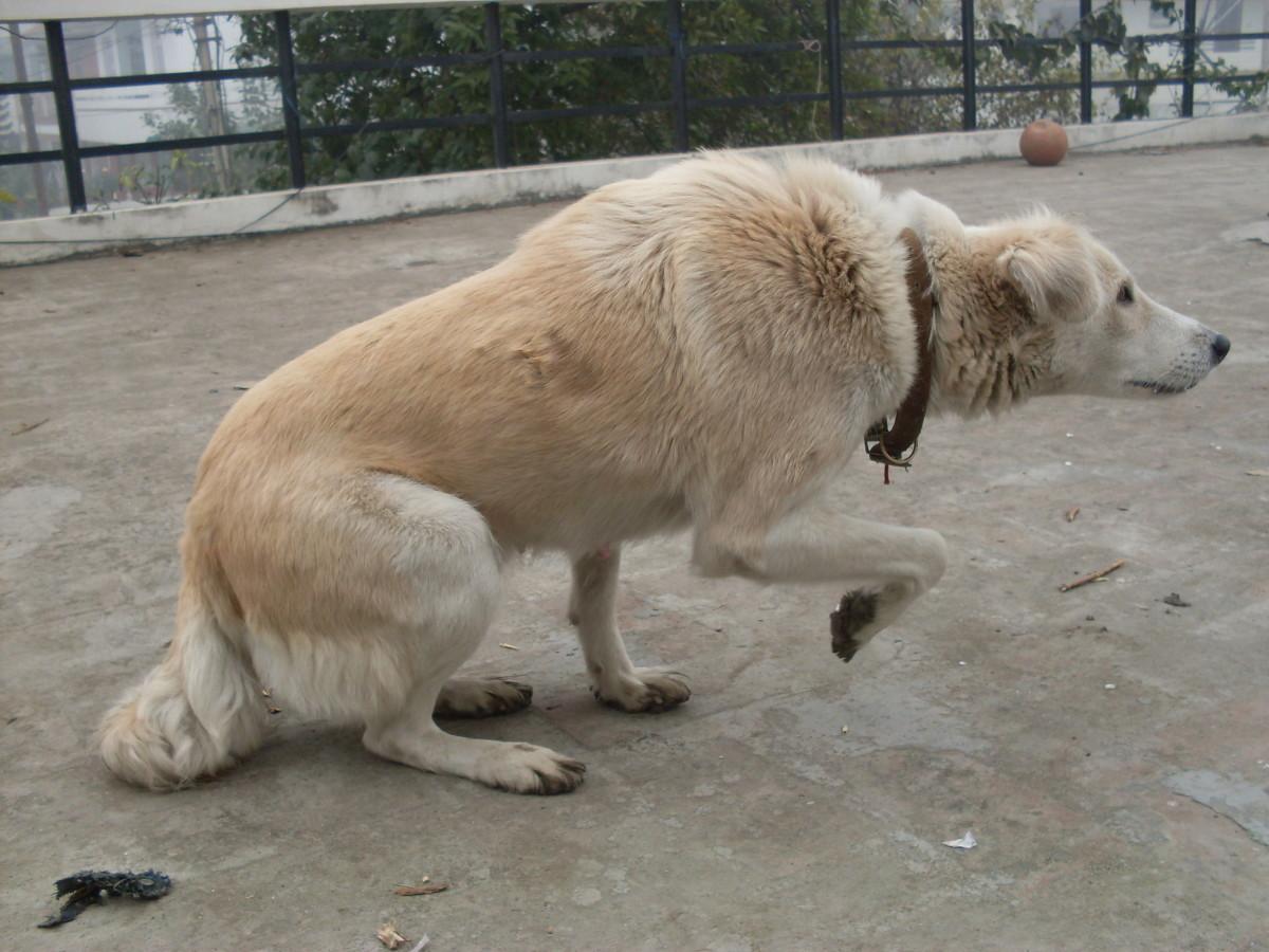 Crouching Dog
