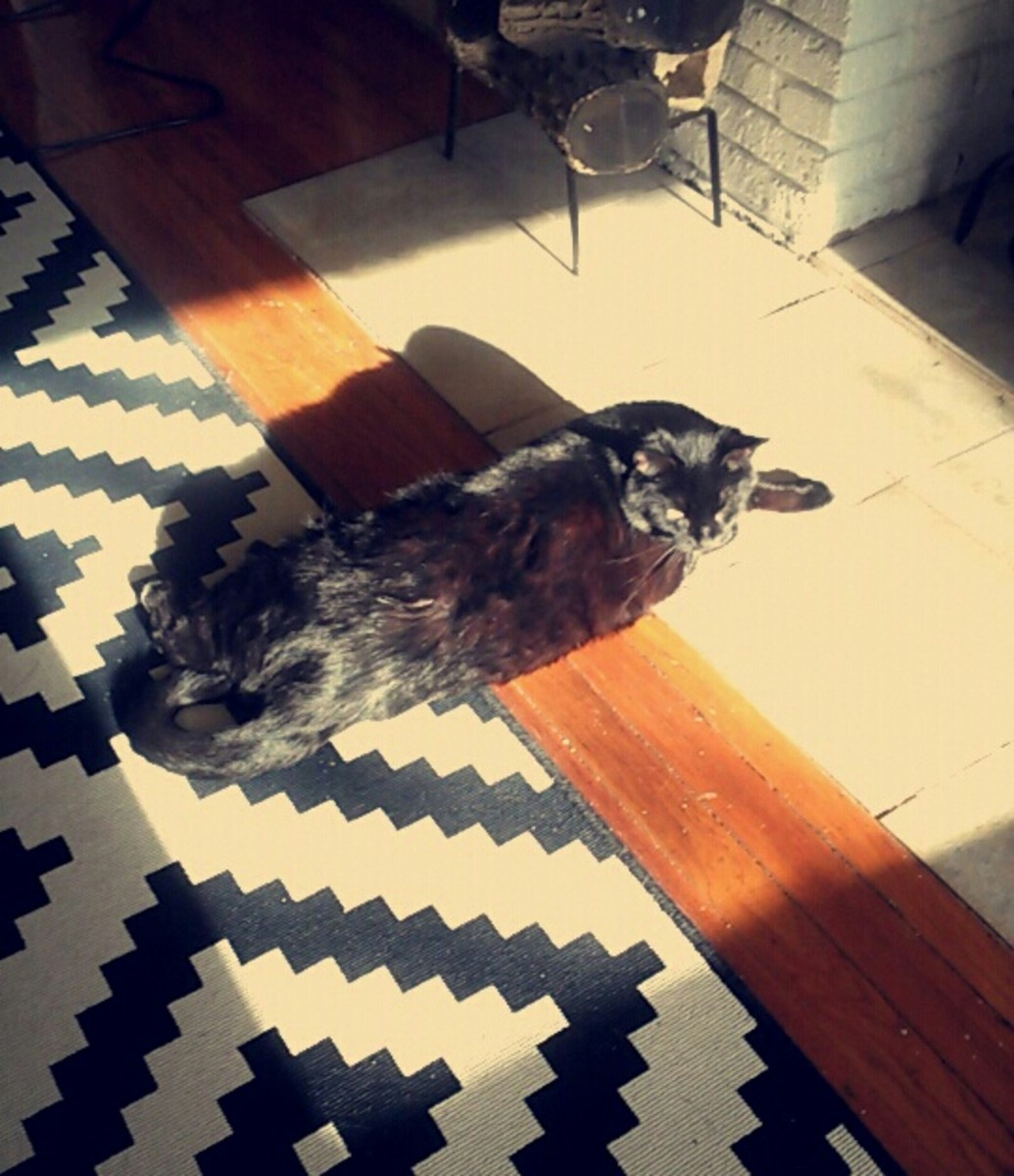 Naturally, he picks the one square of sunlight
