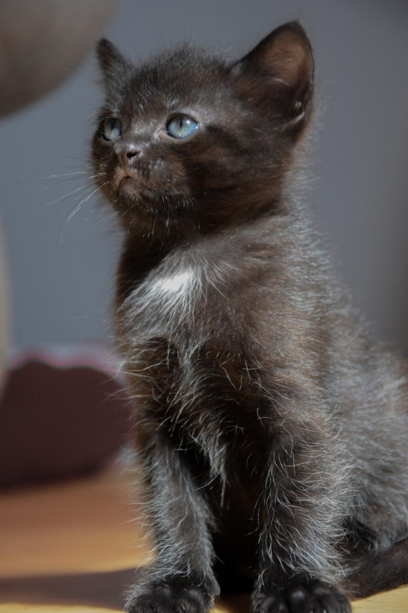 Serious Kitten approves your nerdiness.