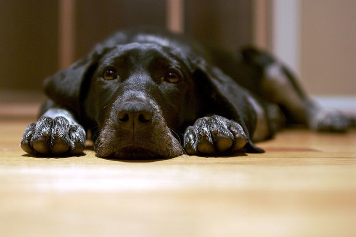 Choose a name for your black dog that you will be proud to call for a lifetime!