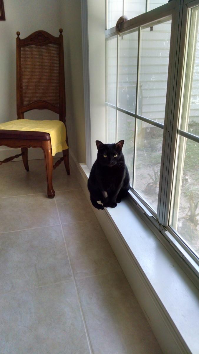 Presenting Libby~~~A Feline Extraordinaire