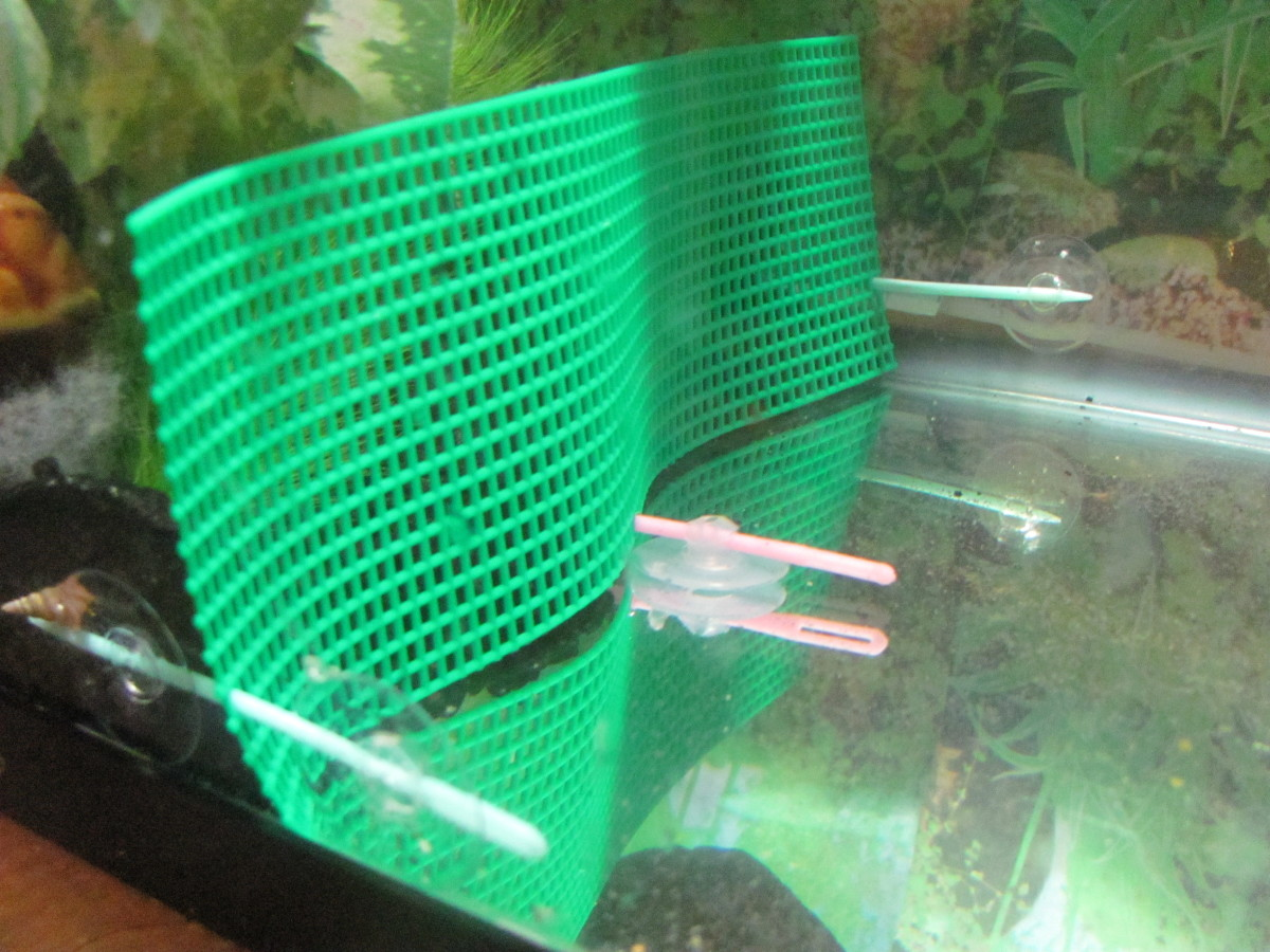 The many aquarium uses of plastic canvas pethelpful for Cloudy water in fish tank solutions