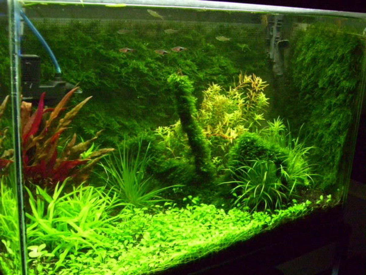A beautiful java moss background using plastic canvas. [original posting of this image has been deleted] http://www.kwas.ca/forum/showthread.php?5551-Moss-Wall-Pics
