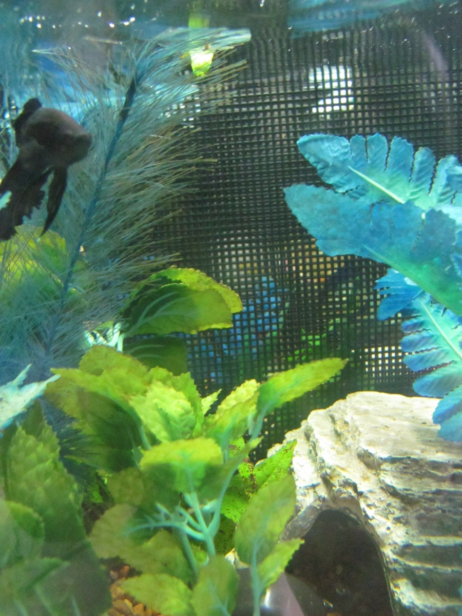 The Many Aquarium Uses Of Plastic Canvas Mesh Dividers