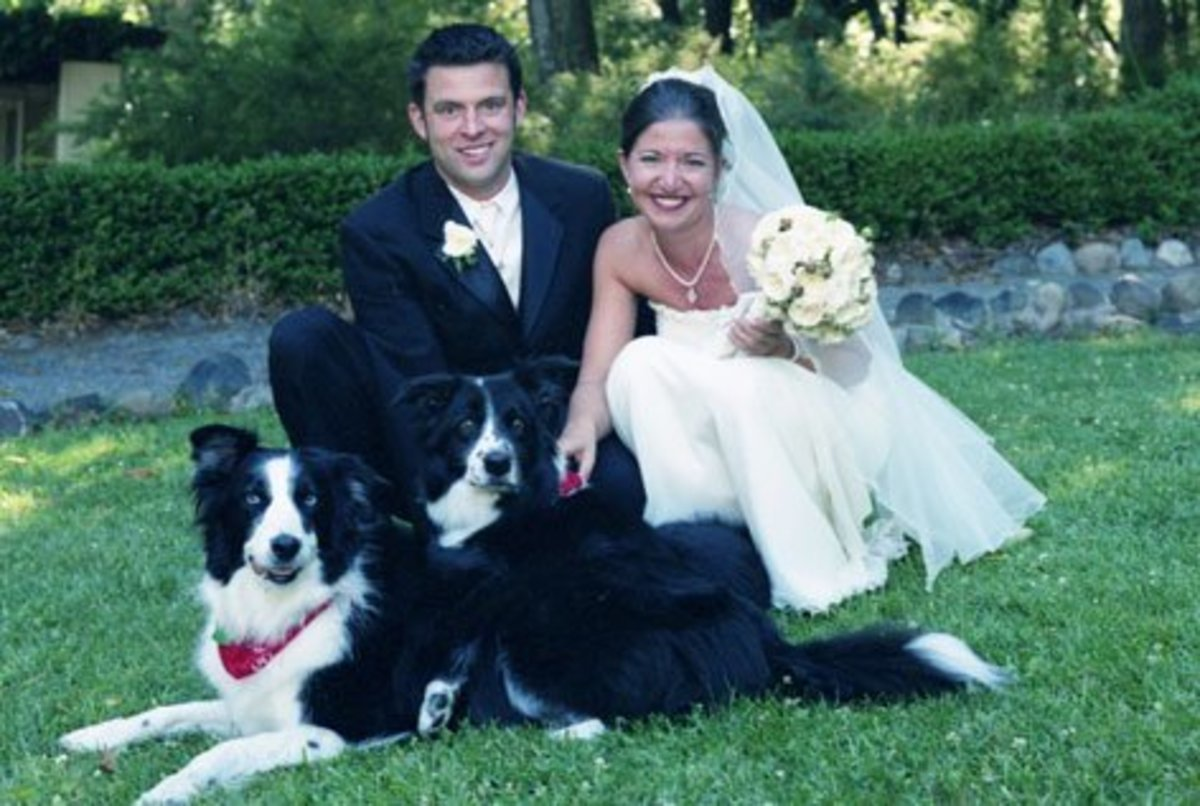 Pet Wedding Where the Dogs Attended In Formal Attire.