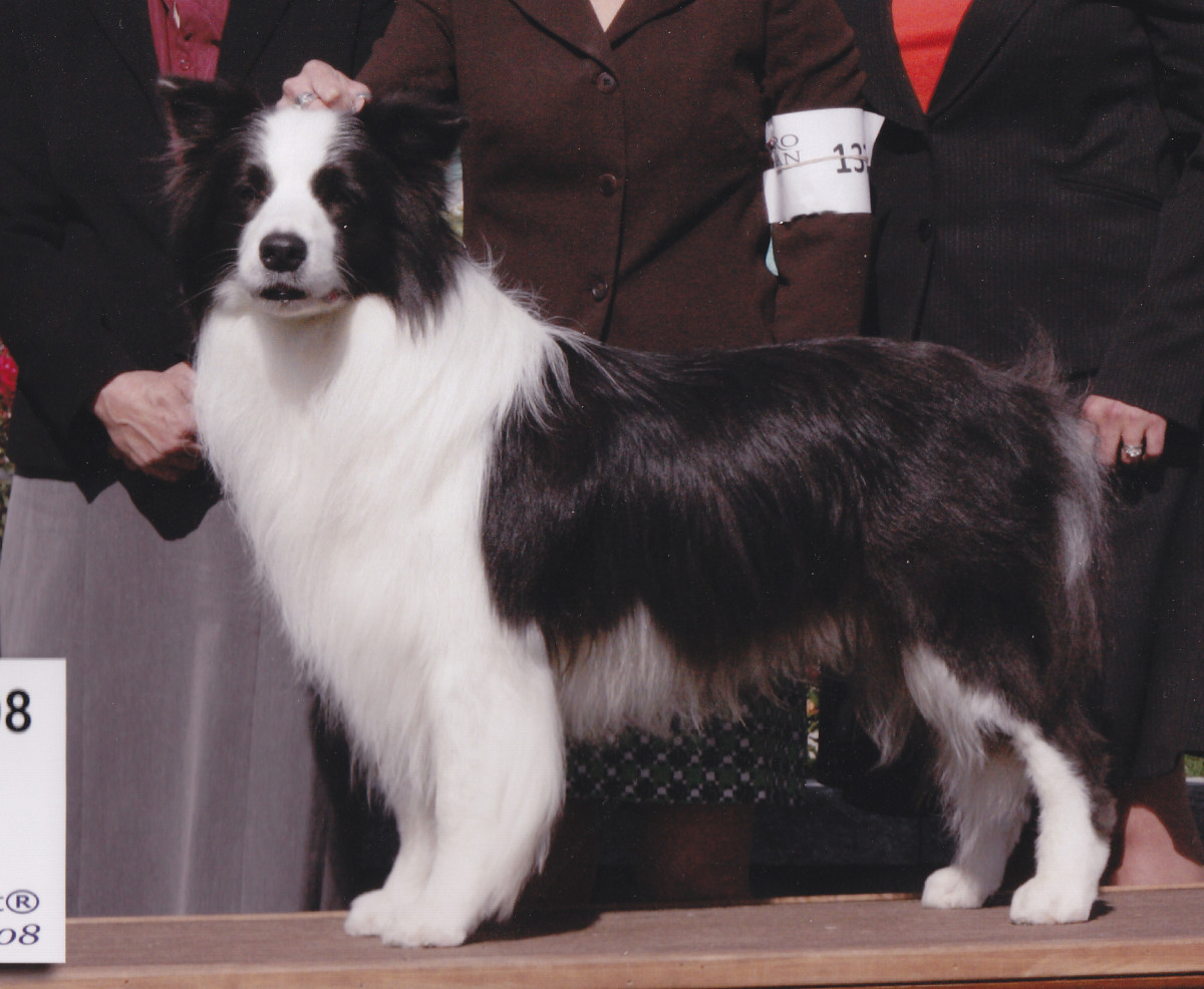 Border Collies Are a Dog Breed That Typically Has White Feet.