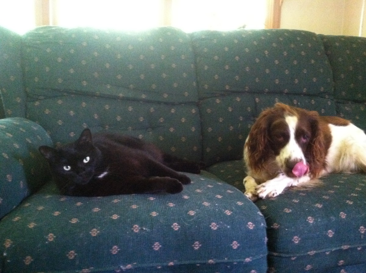 Lady hanging with her best feline pal, Bella the cat