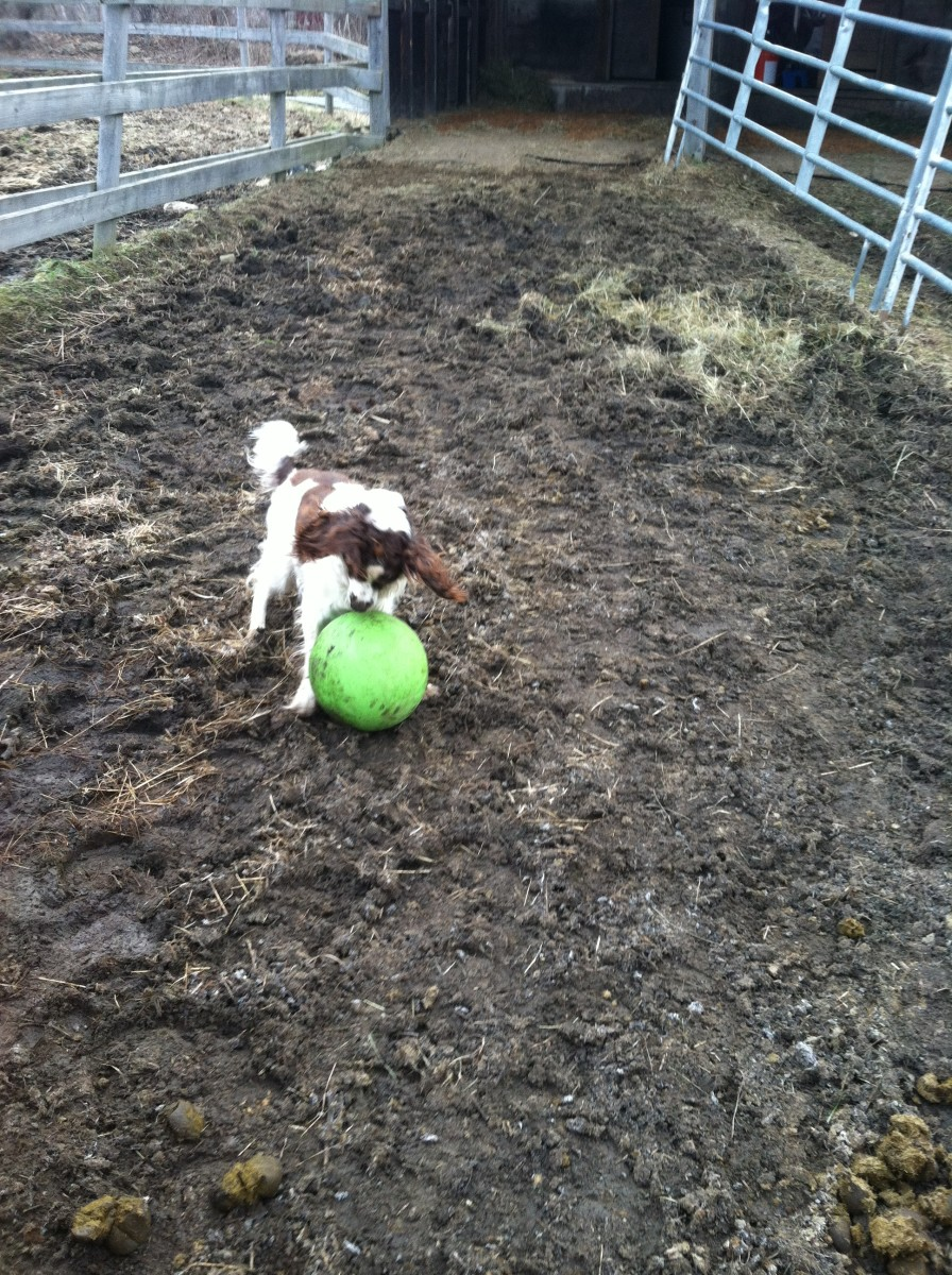 Lady at her horse farm with her favorite ball.
