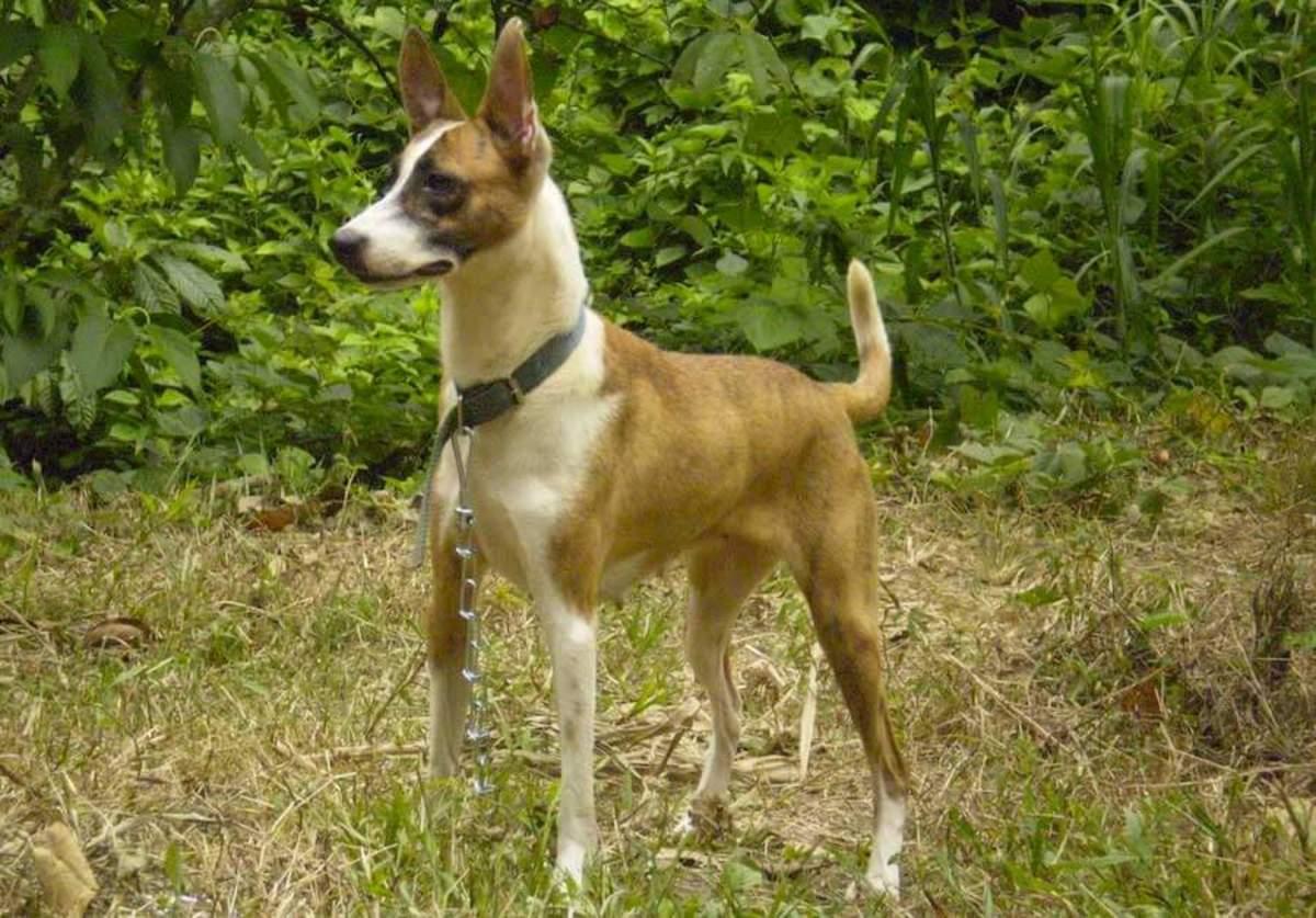 A Telomian dog.