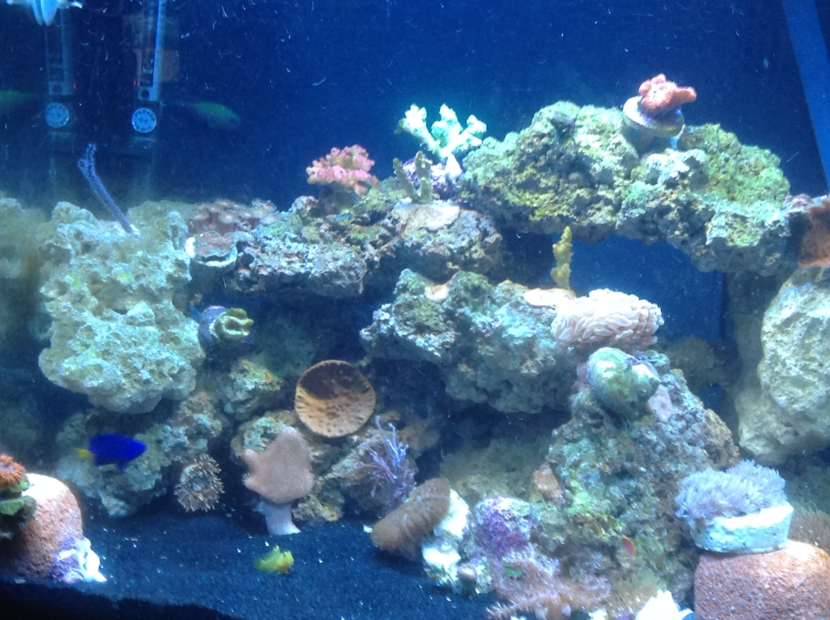 Here is a recent photo of my mixed marine reef aquarium. It's obvious that the water quality is practically crystal clear. I placed two Eco-Bio Blocks in my aquarium approximately two weeks prior to the photo.