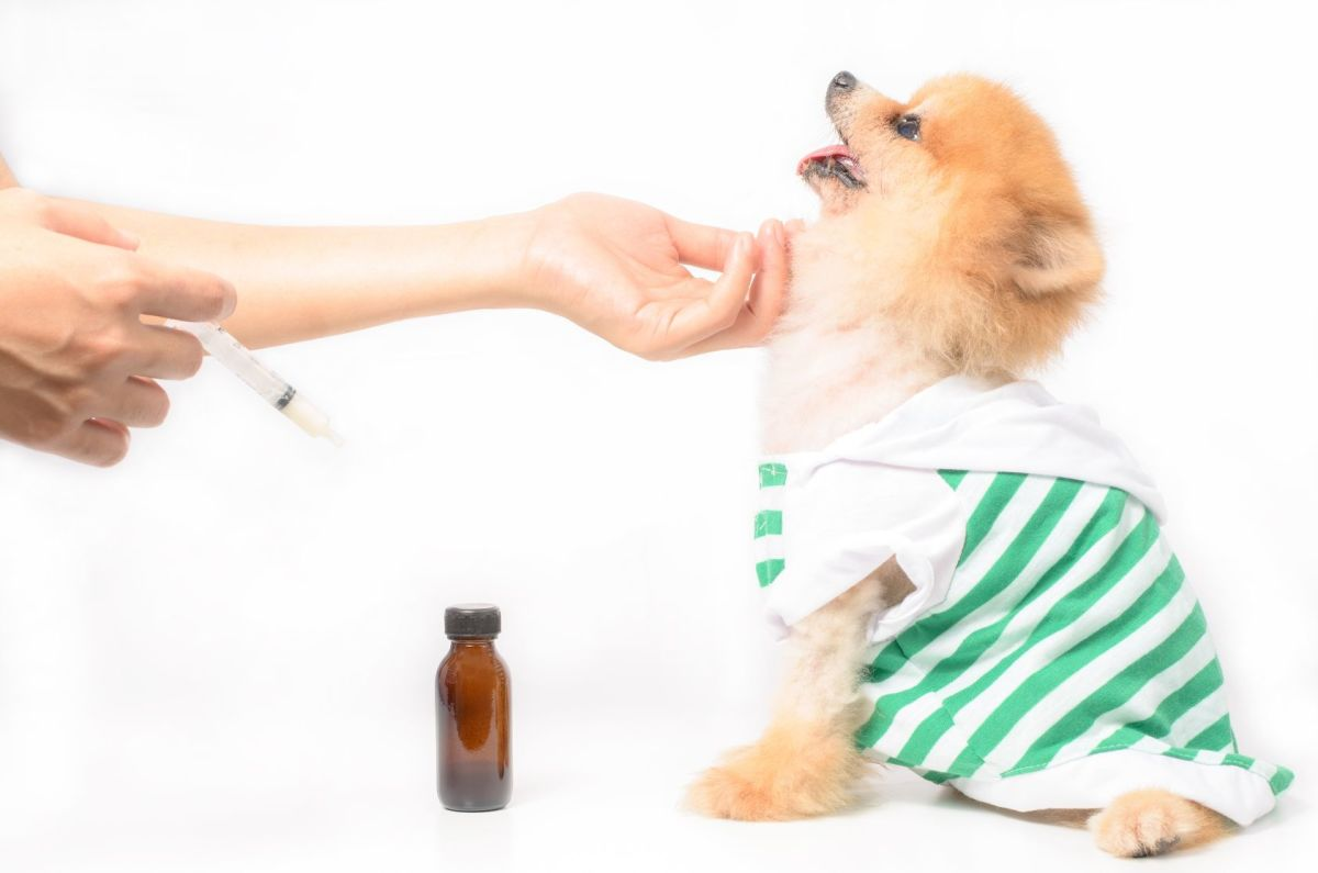 Herbs and homeopathy for pets are often used by naturopaths.
