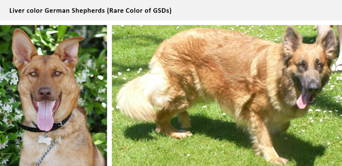 German Shepherd Color Chart Gallery Chart Design For Project