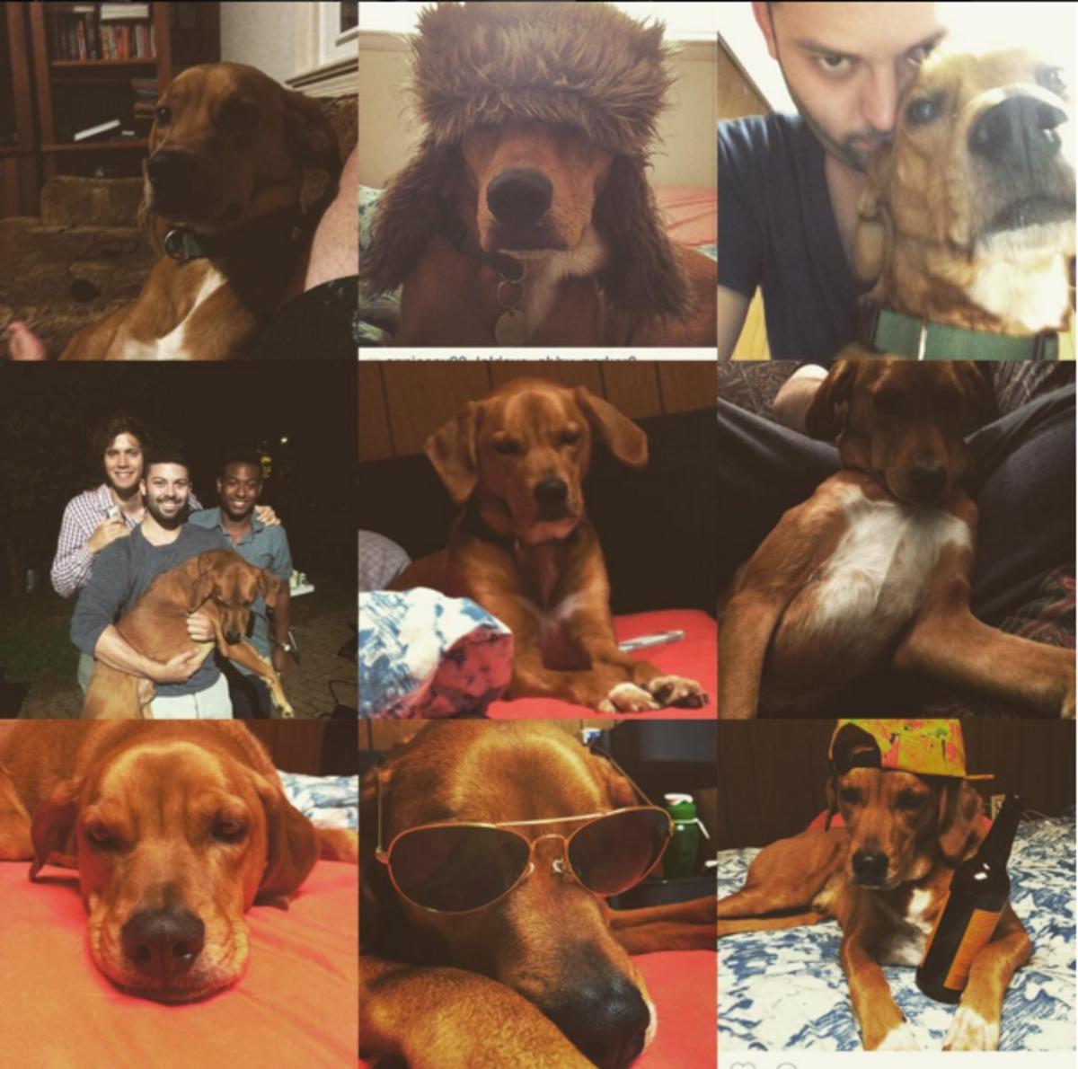 My Dog Sherlock