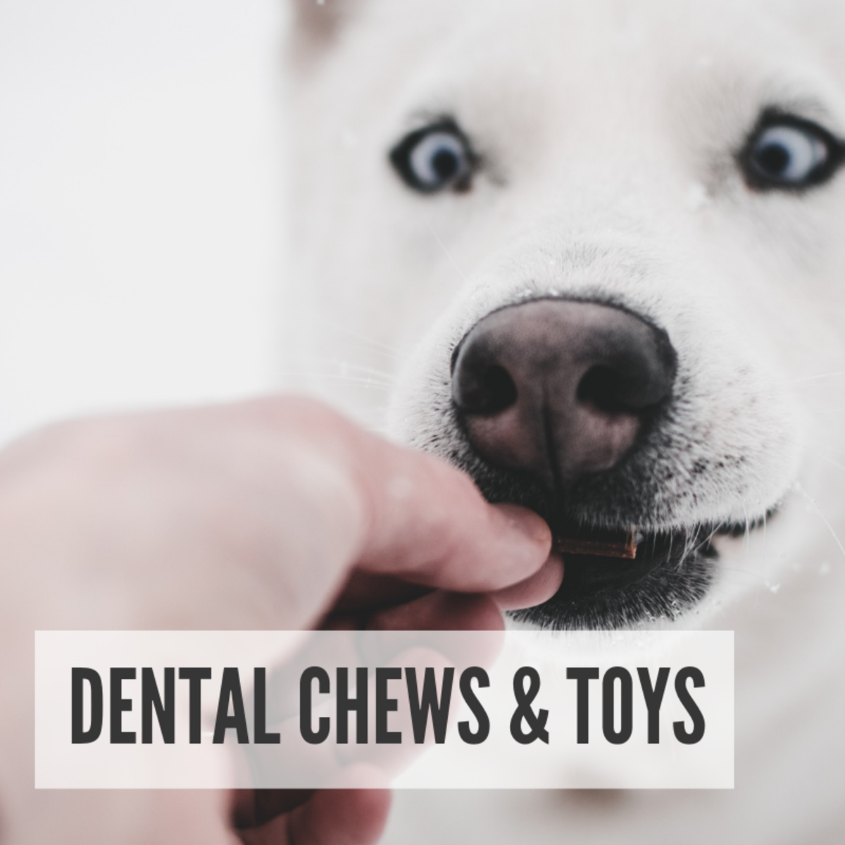 Dental Chews and Toys