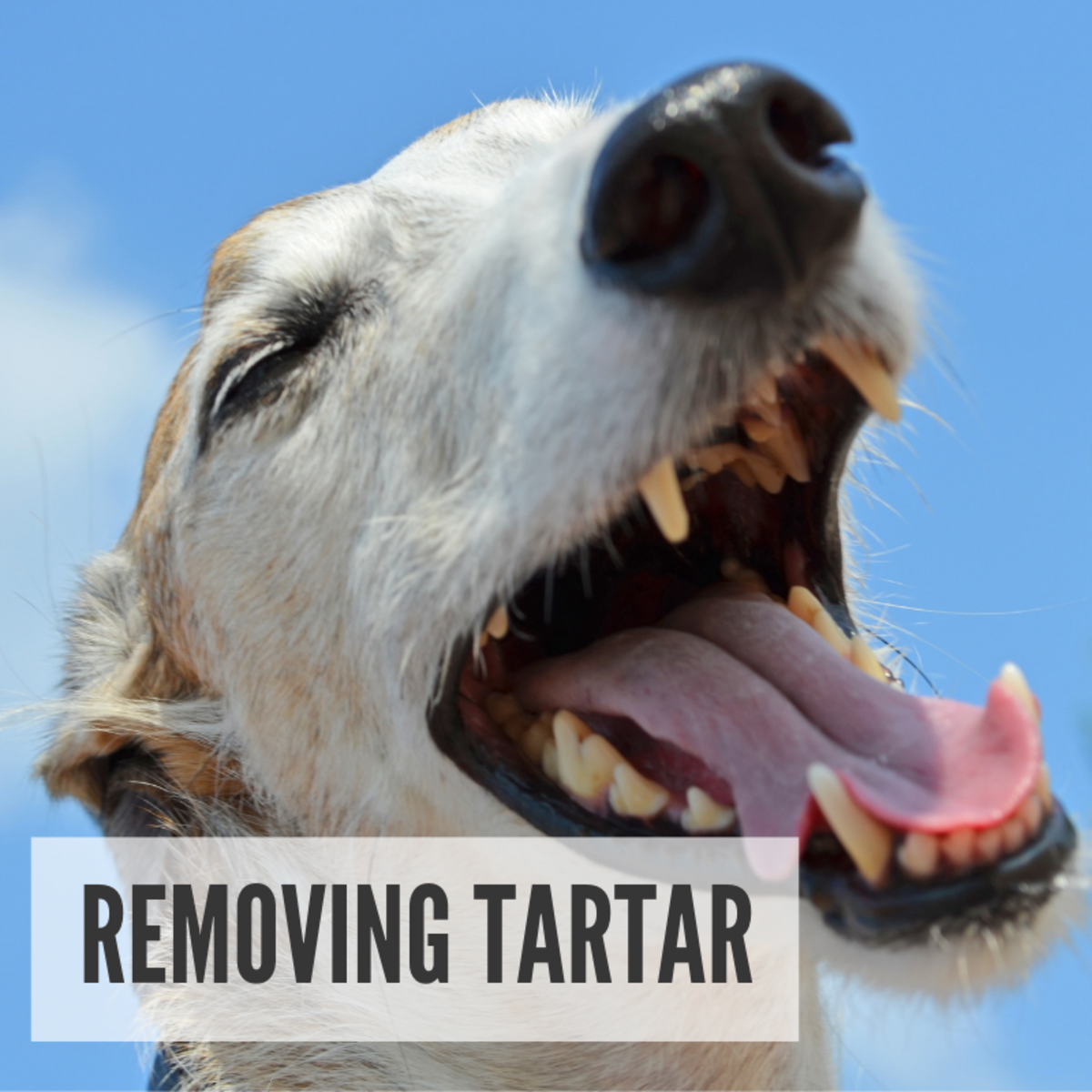 Removing Tartar
