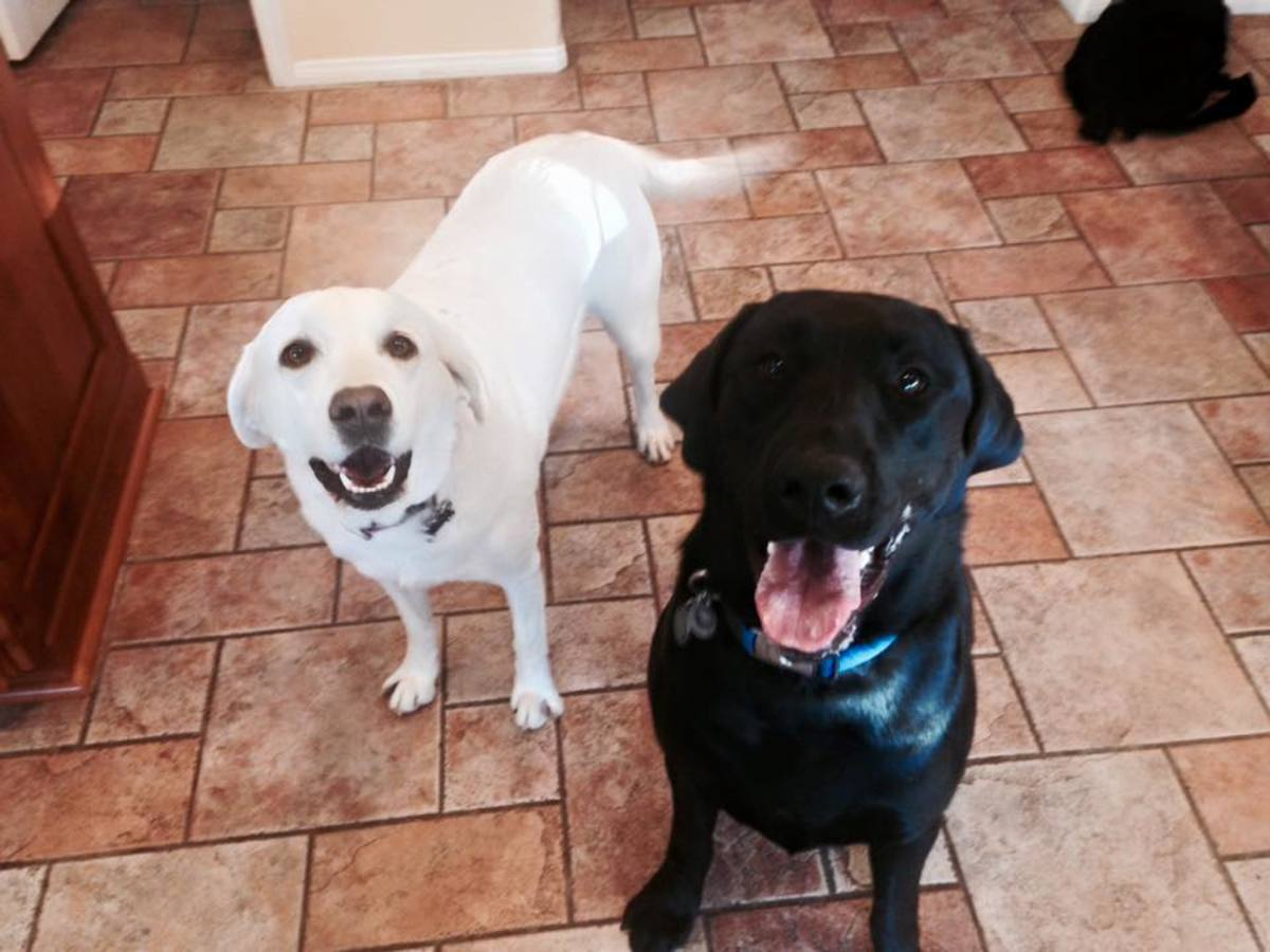 Stella and Cash, two of the most fun and sweet dogs you could ever know!   I absolutely adore this picture!