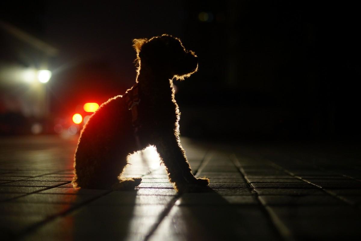 A dog waiting at night.