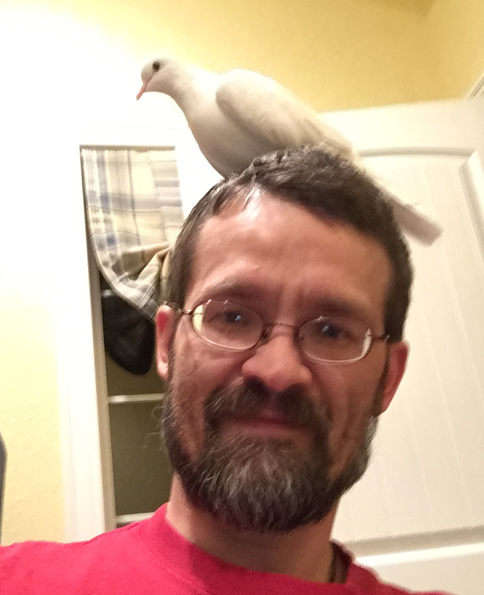 Java Doves love to sit on your head
