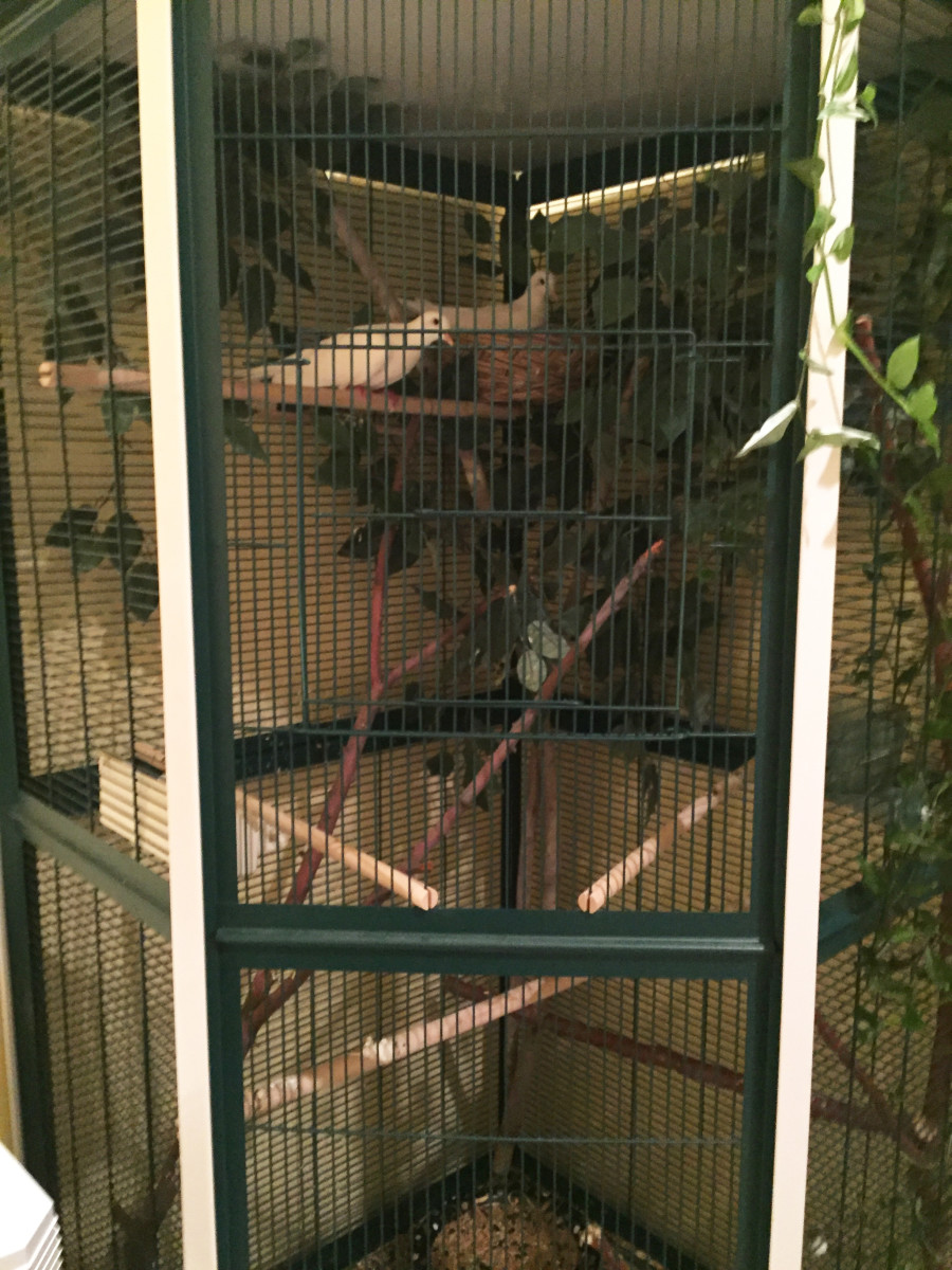 A very large corner cage for mated pairs.