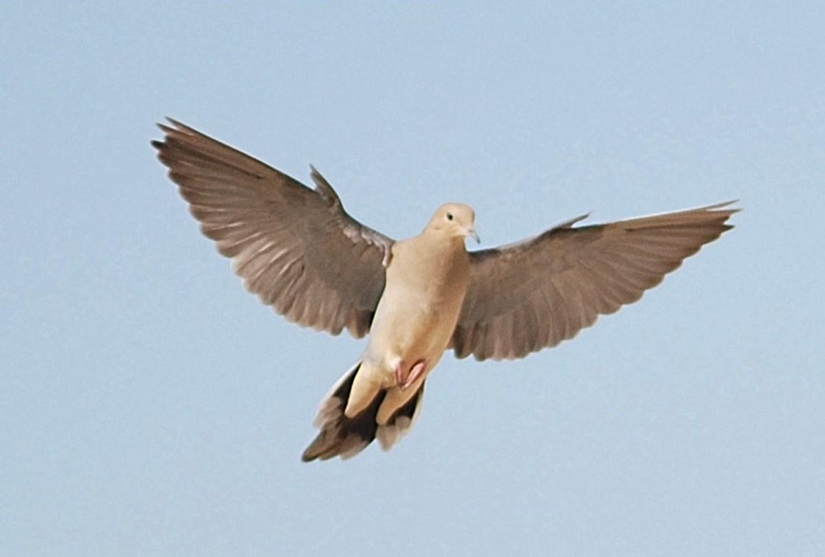 A dove in the wild.