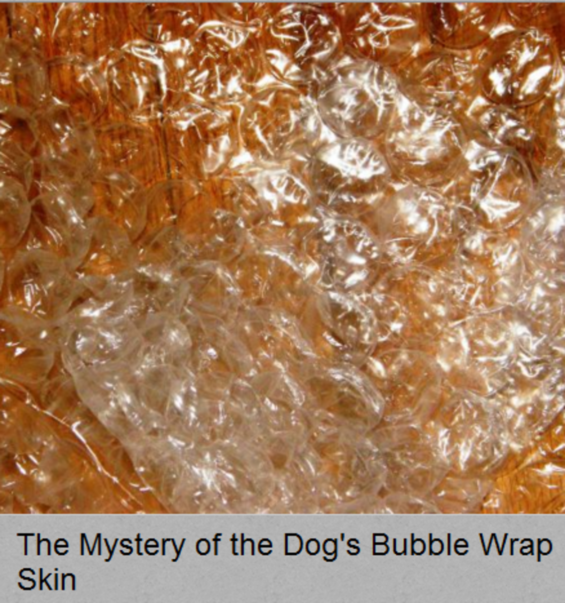 Dog skin feels like bubble wrap?