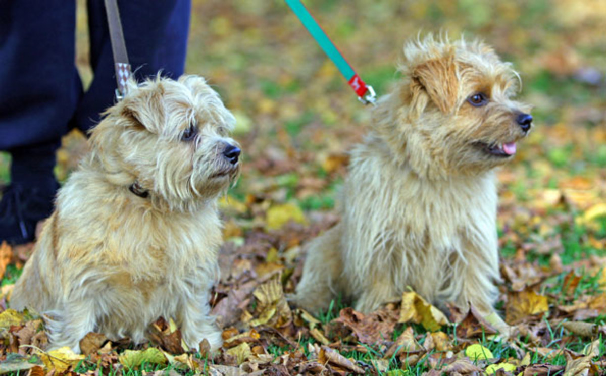 Sometimes you can find a bonded senior pair up for adoption.
