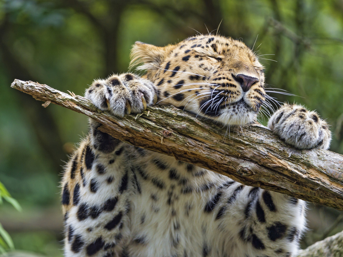 All photos, unless otherwise stated, are from Tambako the Jaguar Via Flickr