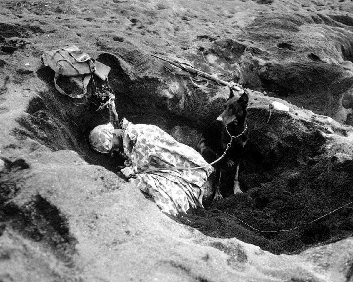 Doberman stands guard on Iwo Jima while her master sleeps, 1945