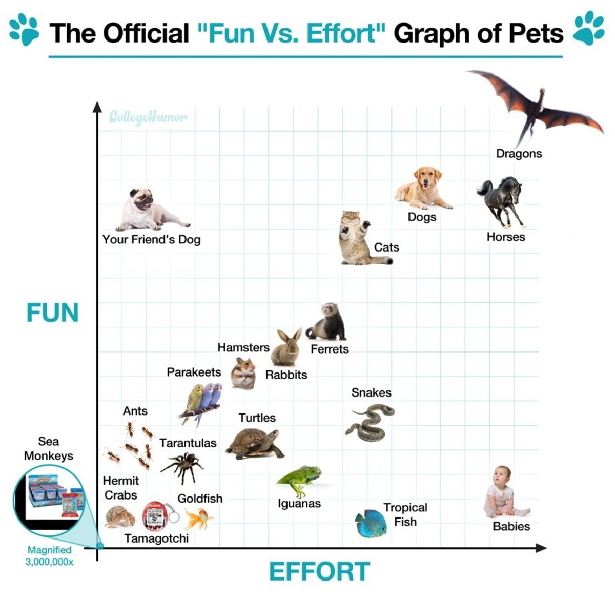 'Fun vs. Effort' roughly translates to rewards vs. the amount of care one puts into their pet.