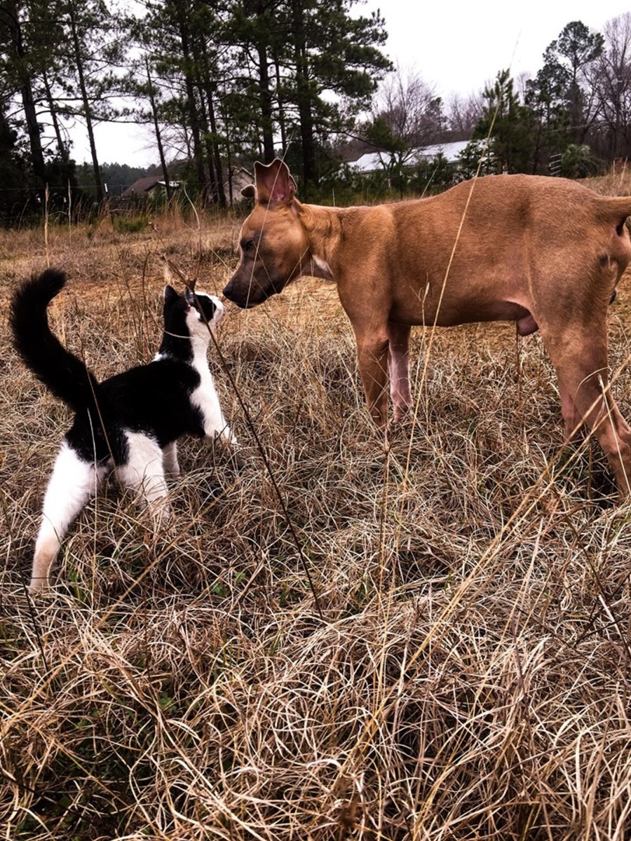 Ziggy the cat and Frankie the puppy