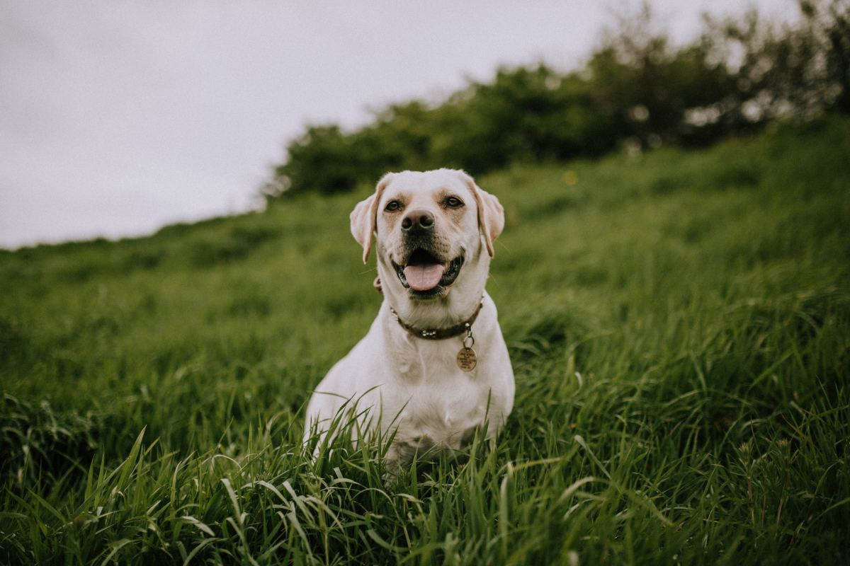 It is important to find out which environmental allergen is triggering your dog's welts.