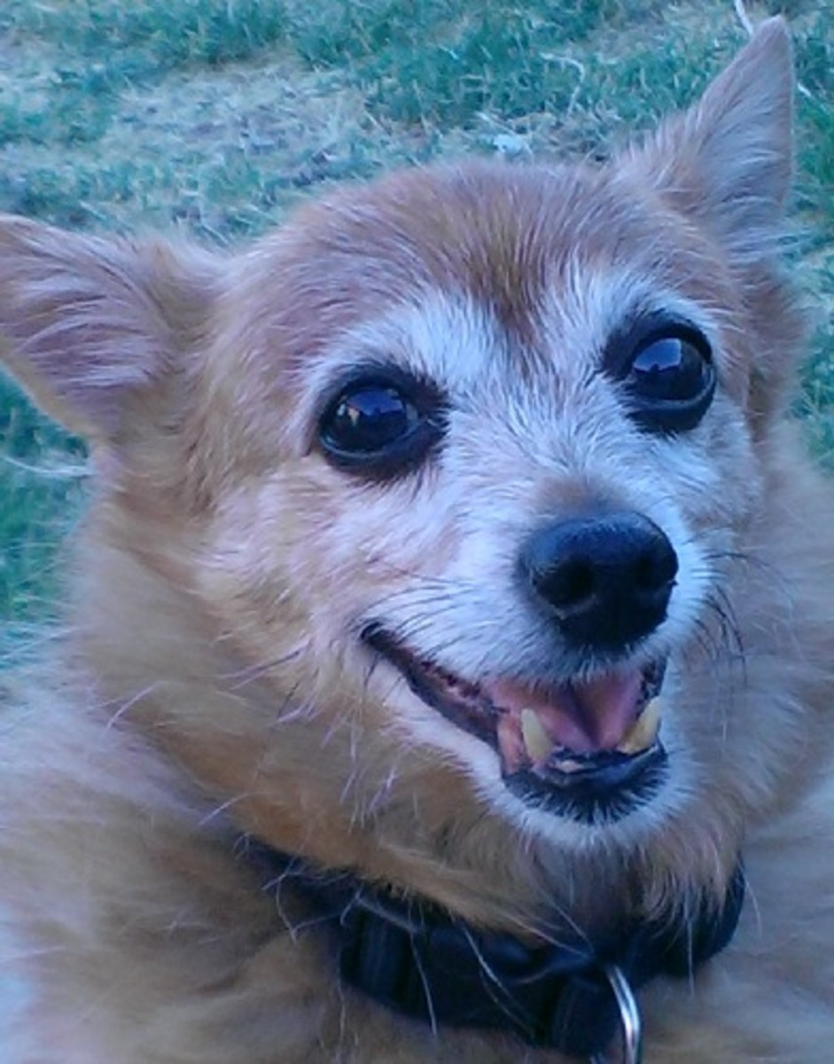 Wilbur's Smile