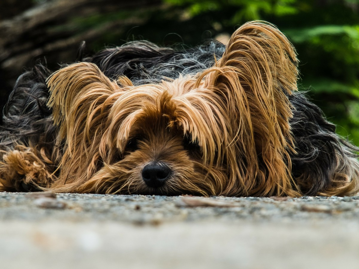 8 Easy Home Remedies for a Dog's Upset Stomach