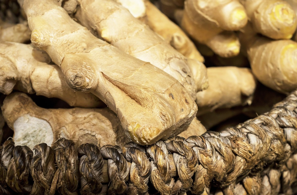 Ginger is not just a culinary spice, it also has amazing medicinal properties.