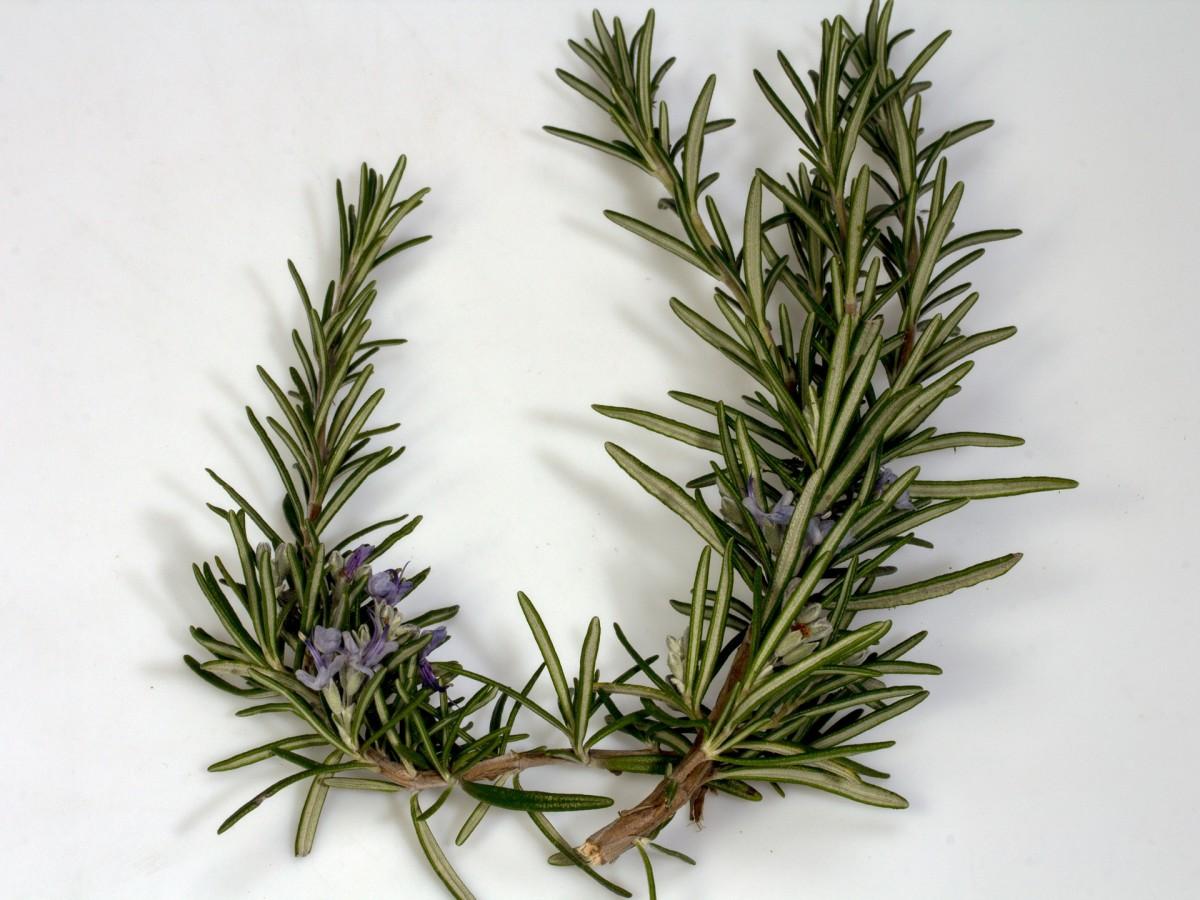Rosemary has wonderful medicinal properties.
