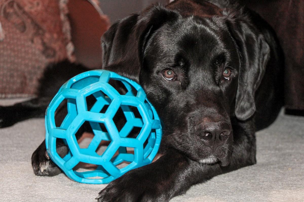 symptoms-of-parvovirus-in-dogs