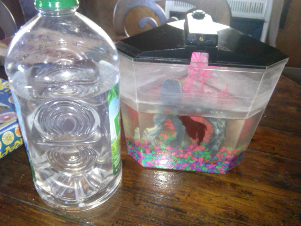 How to Easily Clean Betta Fish Tanks: An Illustrated Guide