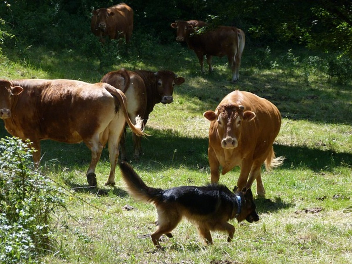 Socialize your dog with other animals.