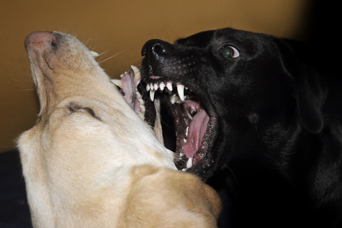 You may only have one chance to stop a dog once he is attacking.